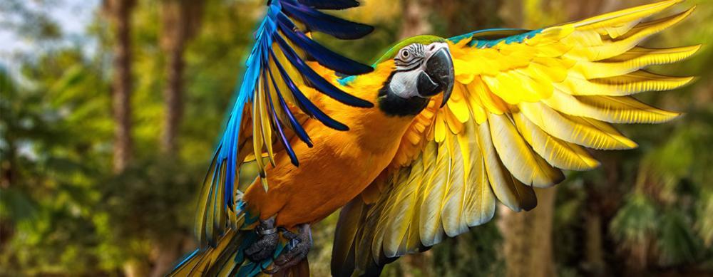 slider-papagei-10336-10110.jpg