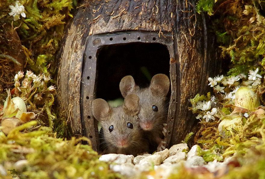 miniature-mice-family-house-simon-dell-43.jpg